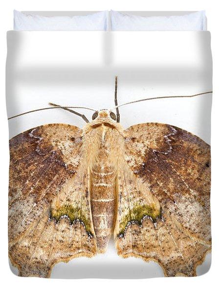 Moth Braulio Carrillo Np Costa Rica Duvet Cover by Piotr Naskrecki