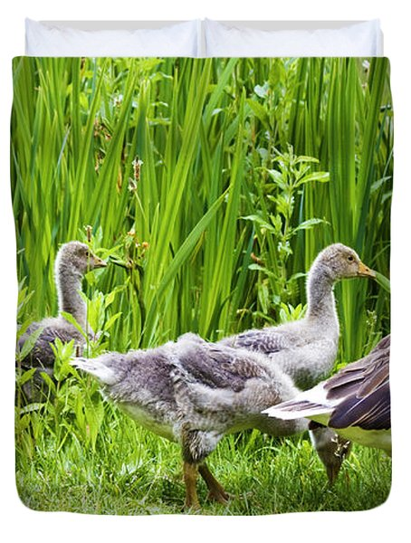 Mother Goose Leading Goslings Duvet Cover by Simon Bratt Photography LRPS