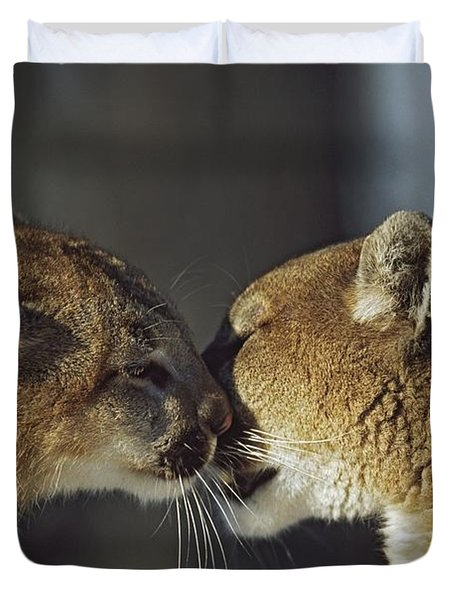 Mountain Lion Felis Concolor Cub Duvet Cover by David Ponton