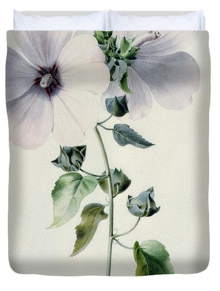 Musk Mallow Duvet Cover by Marie-Anne