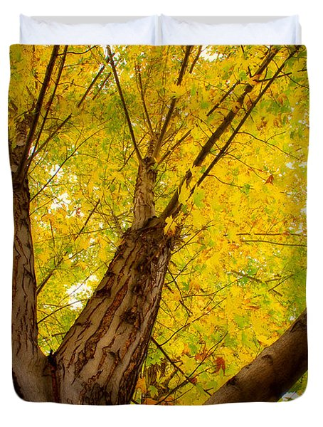 My Maple Tree Duvet Cover by James BO  Insogna