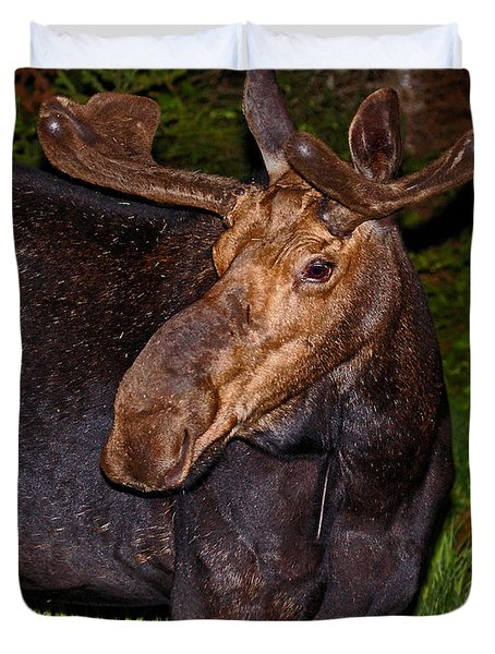 Night Moose 1 Duvet Cover by Lloyd Alexander