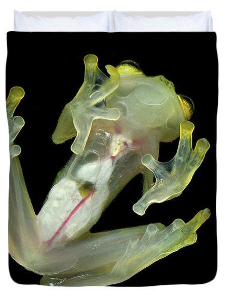 Northern Glassfrog Hyalinobatrachium Duvet Cover by Thomas Marent