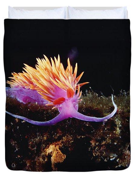 Nudibranch Brightly Colored Arctic Ocean Duvet Cover by Flip Nicklin