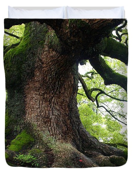 Old Tree In Kyoto Duvet Cover by Carol Groenen