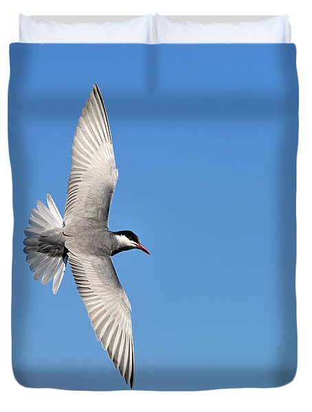 One Good Tern Deserves Another Duvet Cover by Tony Beck