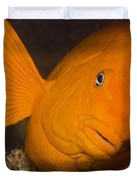 Orange Garibaldi Duvet Cover by Mike Raabe