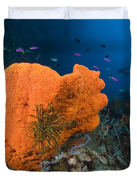 Orange Sponge With Crinoid Attached Duvet Cover by Steve Jones