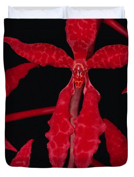 Orchid Renanthera Bella An Endangered Duvet Cover by Mark Moffett