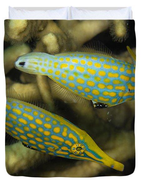 Pair Of Comet Fish, Australia Duvet Cover by Todd Winner