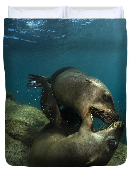 Pair Of Playful Sea Lions, La Paz Duvet Cover by Todd Winner