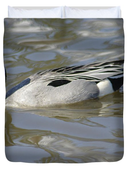 Pintail Duck Duvet Cover by Marilyn Wilson