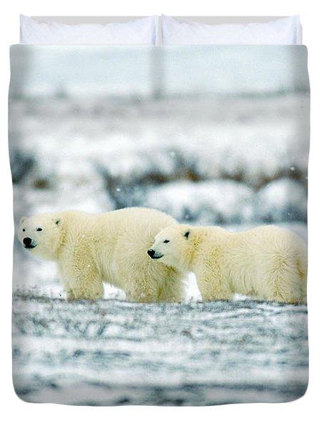 Polar Bears, Churchill, Manitoba Duvet Cover by Mike Grandmailson