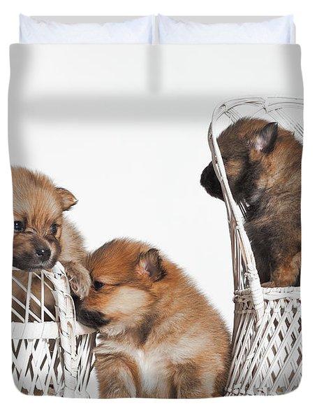 Pomeranian 3 Duvet Cover by Everet Regal