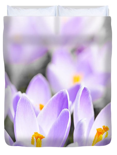 Purple Crocus Blossoms Duvet Cover by Elena Elisseeva