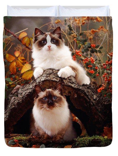 Ragdoll Kitten And Birman Kitten Duvet Cover by Jane Burton