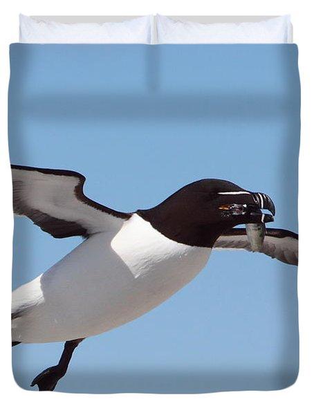 Razorbill In Flight Duvet Cover by Bruce J Robinson