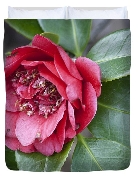 Red Camellia Squared Duvet Cover by Teresa Mucha