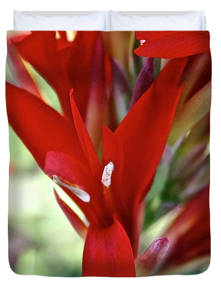 Red Canna Duvet Cover by Susan Herber
