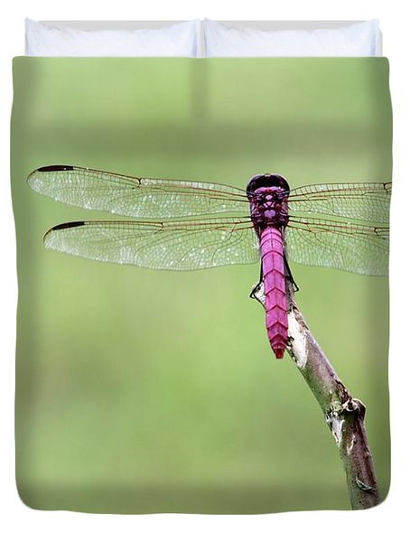 Red Dragonfly Dancer Duvet Cover by Sabrina L Ryan