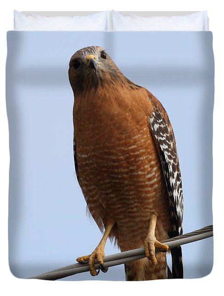 Red-shouldered Hawk . 7d10254 Duvet Cover by Wingsdomain Art and Photography
