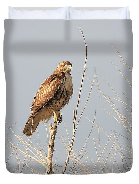 Red Tailed Hawk 20100101-5 Duvet Cover by Wingsdomain Art and Photography