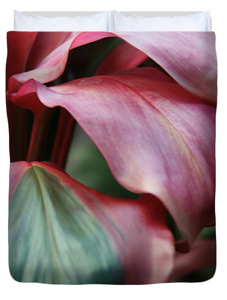 Red Ti - Cordyline Terminalis Duvet Cover by Sharon Mau