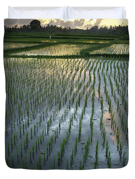 Rice Fields, Near Ubud Bali, Indonesia Duvet Cover by Huy Lam