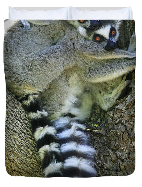 Ring-tailed Lemurs Madagascar Duvet Cover by Cyril Ruoso