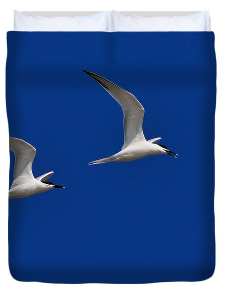 Sandwich Terns Duvet Cover by Tony Beck