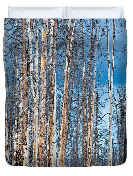 Scarred Pines Yellowstone Duvet Cover by Steve Gadomski