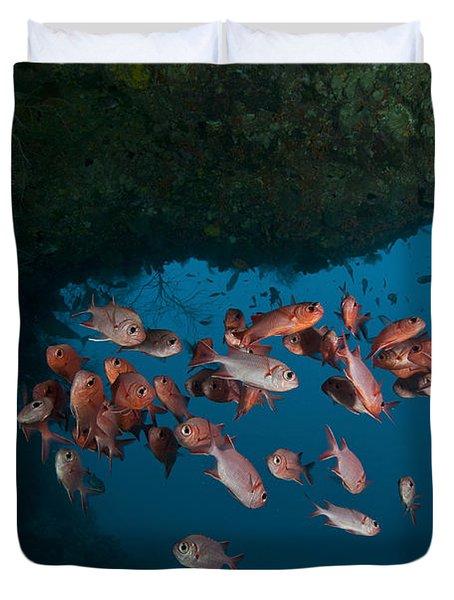 School Of Red Bigeye Under A Rocky Duvet Cover by Mathieu Meur