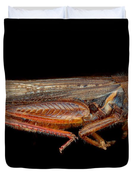 Science - Entomology - The specimin Duvet Cover by Mike Savad
