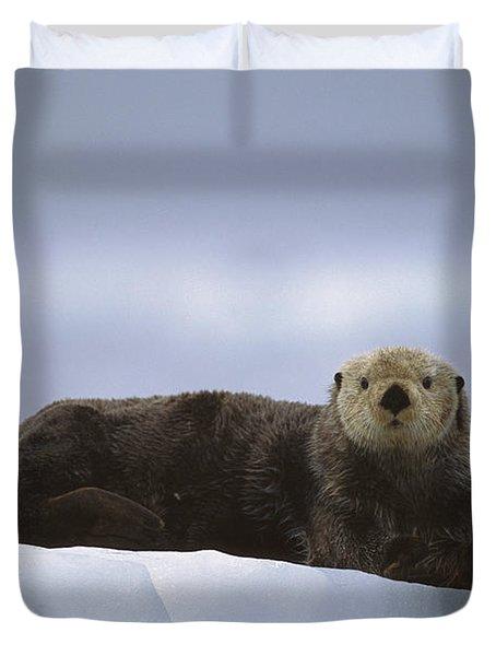Sea Otter Enhydra Lutris Male Hauled Duvet Cover by Suzi Eszterhas