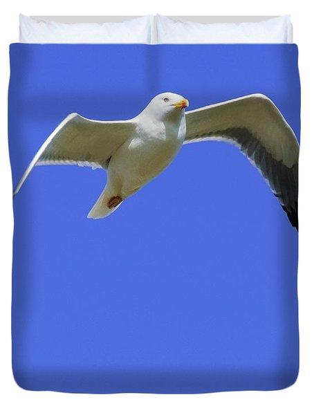 Seagull In Flight Duvet Cover by Ben Welsh