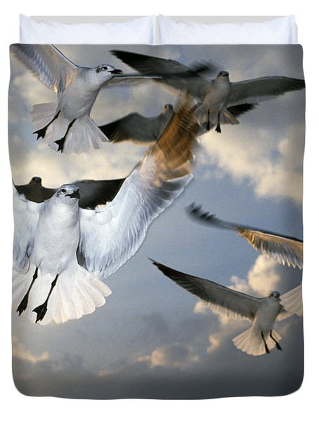 Seagulls In Flight Duvet Cover by Natural Selection Ralph Curtin