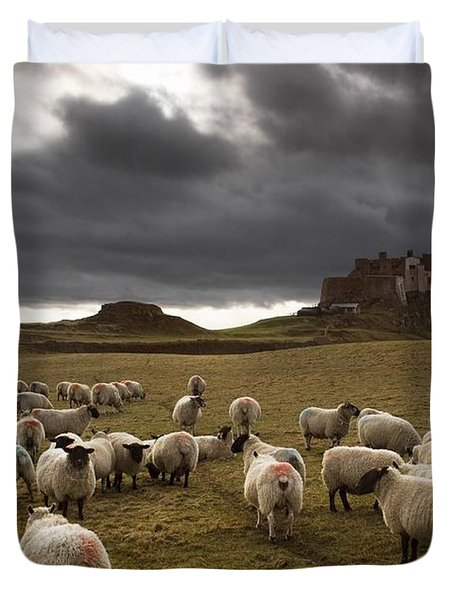 Sheep Grazing By Lindisfarne Castle Duvet Cover by John Short