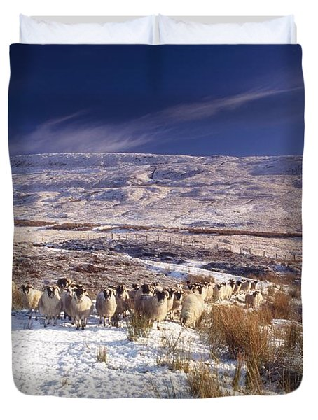Sheep In Snow, Glenshane, Co Derry Duvet Cover by The Irish Image Collection