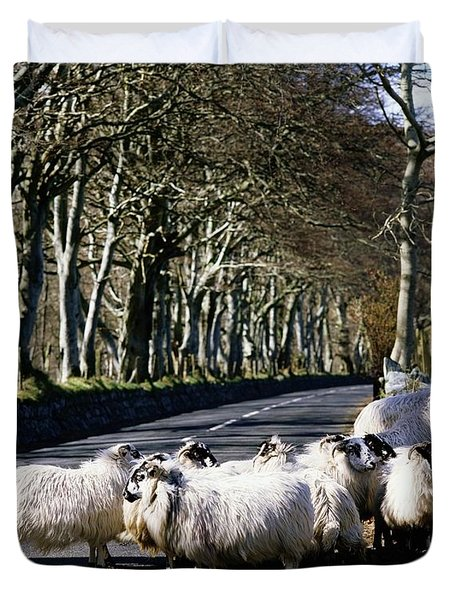 Sheep On The Road, Torr Head, Co Duvet Cover by The Irish Image Collection