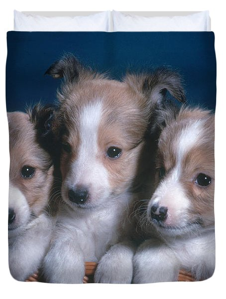Sheltie Puppies Duvet Cover by Photo Researchers, Inc.