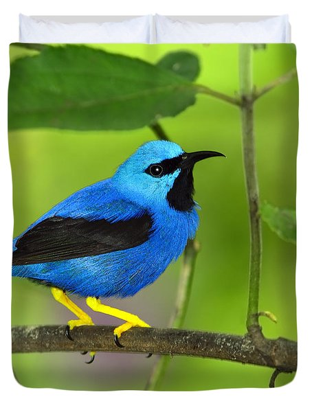 Shining Honeycreeper Duvet Cover by Tony Beck