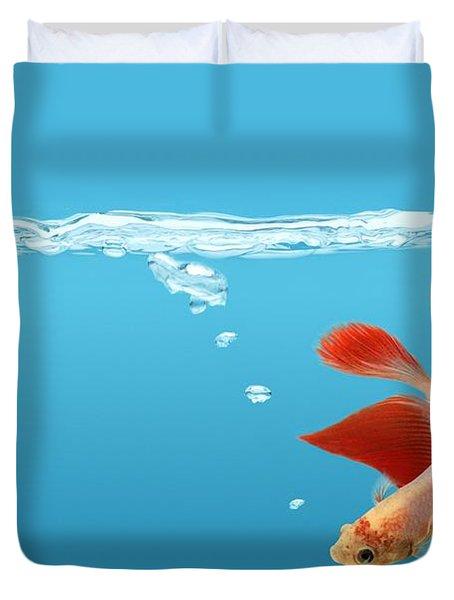 Siamese Fighting Fish Betta Splendens Duvet Cover by Don Hammond
