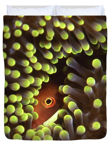 Skunk Clownfish Hiding In Anemone Duvet Cover by Beverly Factor