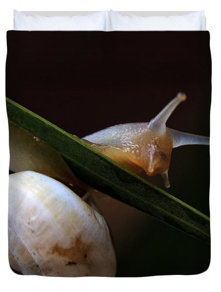Snail Duvet Cover by Stylianos Kleanthous