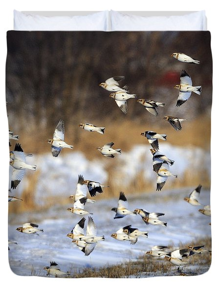 Snow Buntings Duvet Cover by Tony Beck