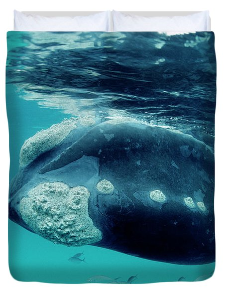 Southern Right Whale Eubalaena Duvet Cover by Mike Parry