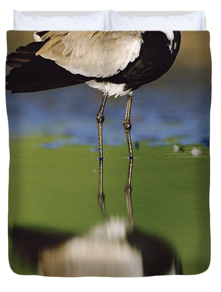 Spur Winged Plover With Its Reflection Duvet Cover by Tim Fitzharris