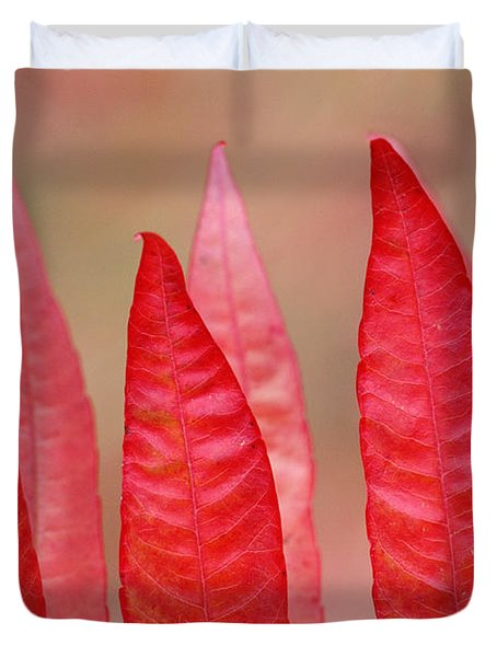 Sumac Leaves Rhus Coriaria In Fall Duvet Cover by Mike Grandmailson
