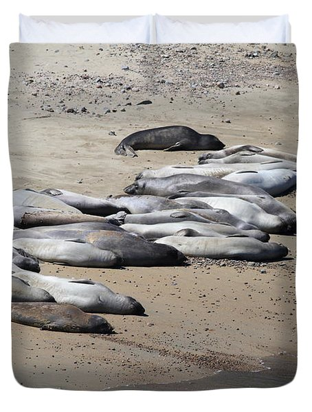 Sunbathing Elephant Seals Along A Beach At Point Reyes California . 7D16063 Duvet Cover by Wingsdomain Art and Photography