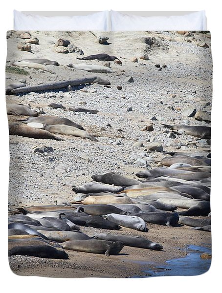 Sunbathing Elephant Seals Along A Beach At Point Reyes California . 7d16065 Duvet Cover by Wingsdomain Art and Photography